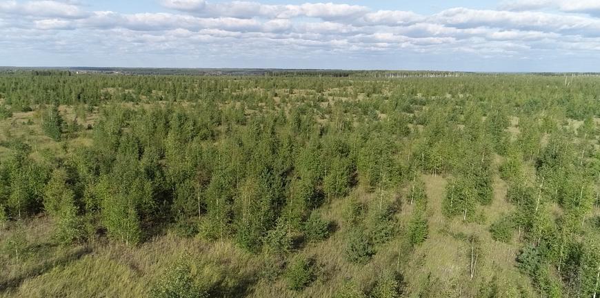 В России предлагают ввести меру добровольного страхования леса от пожара